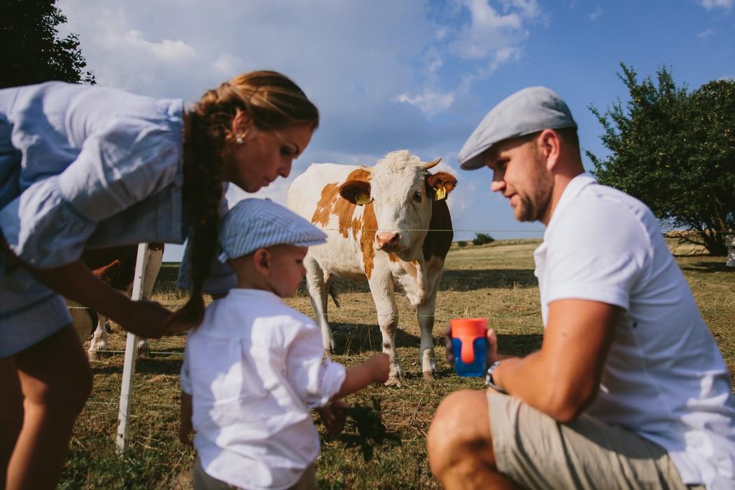 záběr na rodinku a krávu, která se na ne dívá