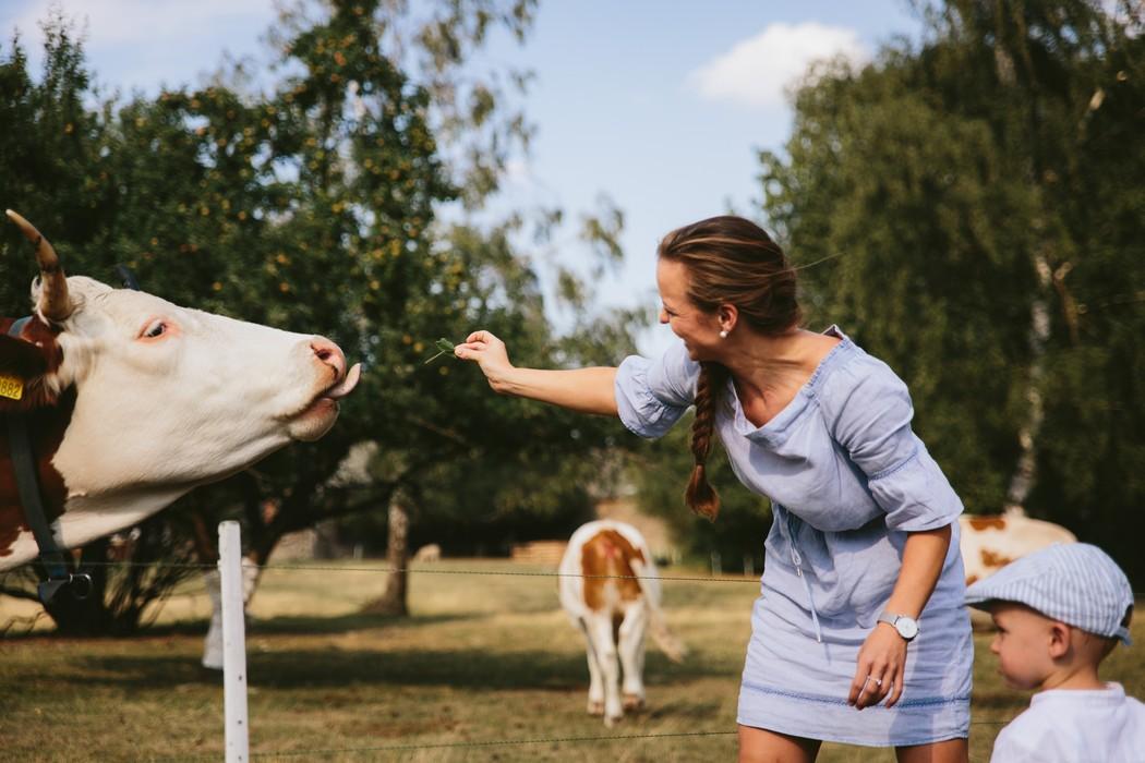 maminka s dítětem krmí krávu