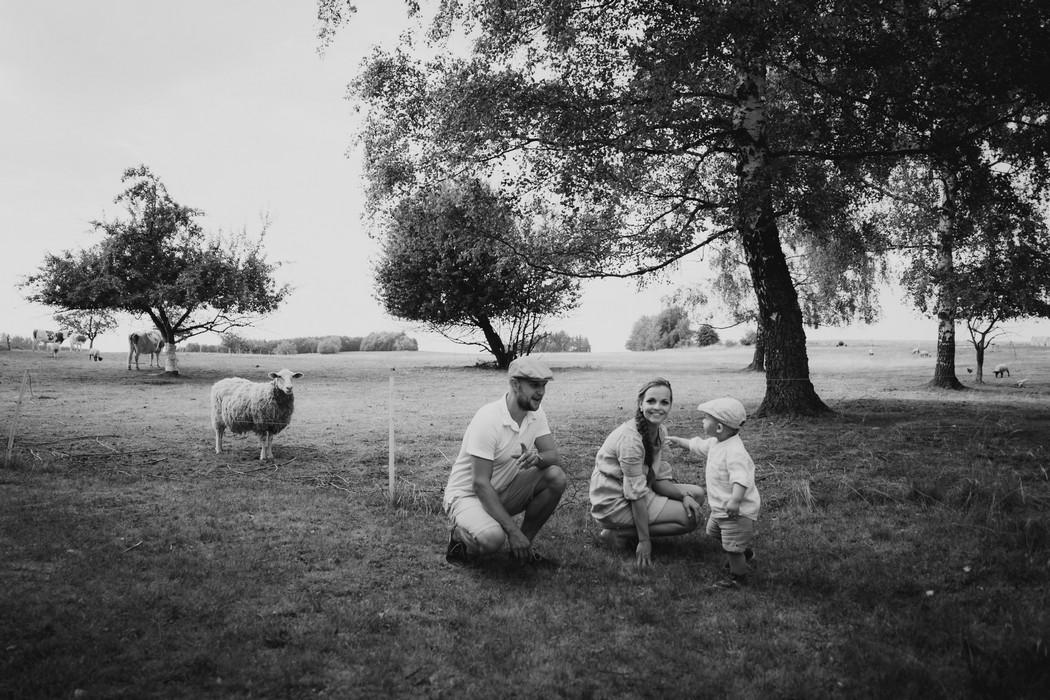 záběr na rodinku na louce s ovcí