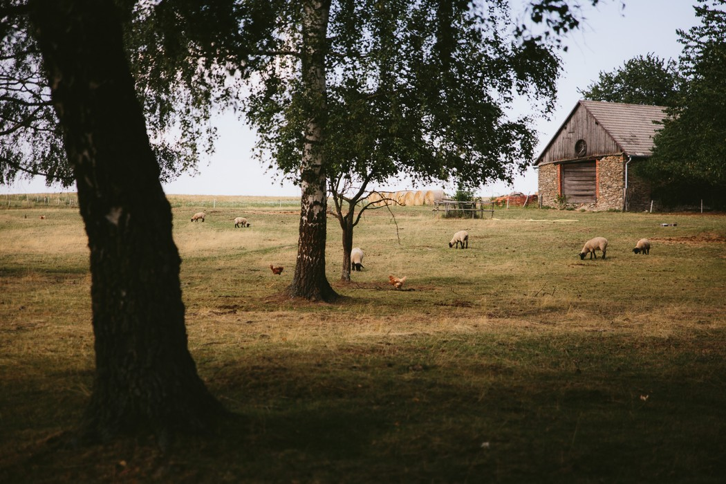 záběr na statek s ovcami