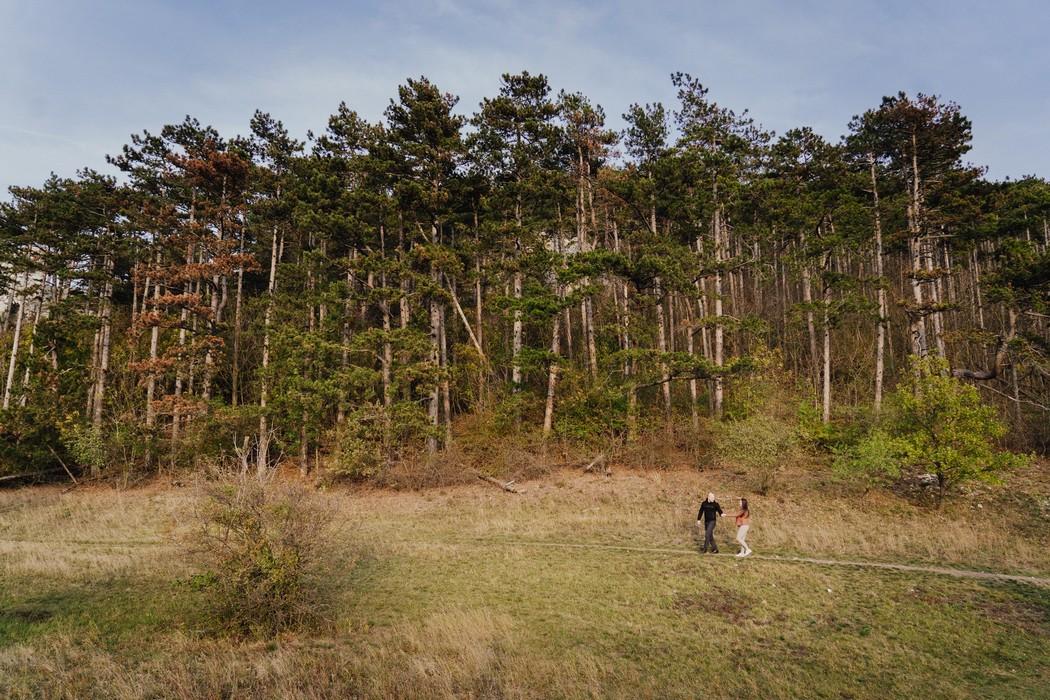 Snoubnci kráčejí loukou