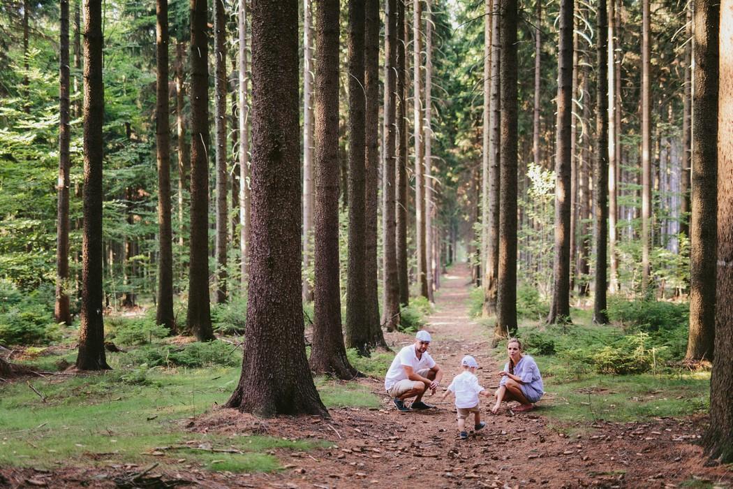 rodinka v lese